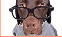 Инструкция по активации премиум поддержки Ruckus Watchdog